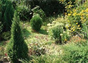 В Белгородском районе появится садовый центр