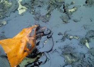 Разлив нефти угрожает заповеднику на юге Франции