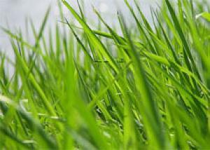 Во Фрунзенском районе пройдет конкурс газонокосильщиков