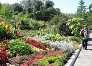 Ботанический сад: новые проекты
