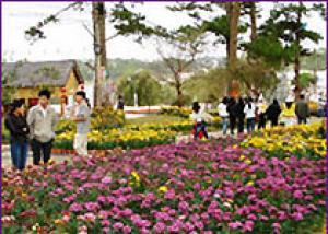 Фестиваль цветов в Далате перенесен на следующий год