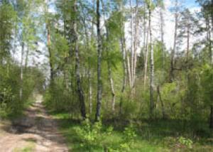 Россия может потерять свой лес