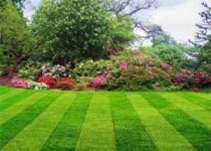 Запах свежескошенной газонной травы снимает стресс