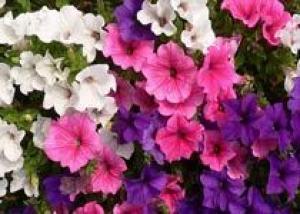 В Петербурге открывается садоводческая выставка `Осенняя флора`