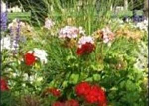 Цветы Колорадского колледжа снова на высоте