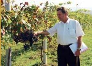 Депутаты парламента Грузии приняли участие в сборе винограда