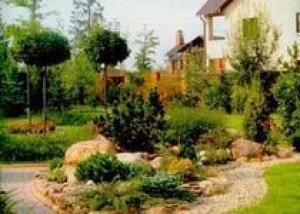 Штамбы позволяют украсить сад