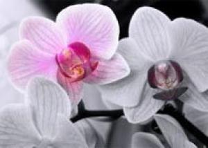 Ботаники обнаружили самую маленькую орхидею в мире