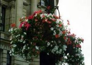 Английский город украсят цветами