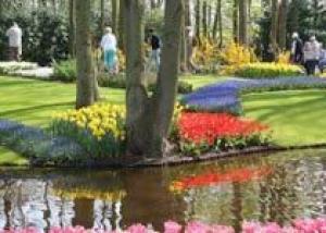 В 2010 году Анапа станет `городом цветов`