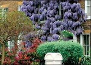 Лондон цветет и пахнет