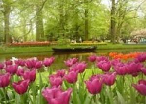Самый большой парк цветов в мире