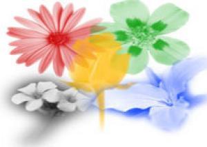 Волгодонск отметит День города выставкой цветов