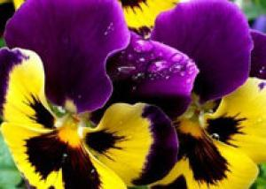 В Ботаническом саду пройдет «Бал цветов»