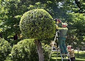 В Сочи вместо обанкротившегося «Зеленстроя» создадут МУП «Озеленитель»