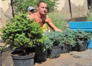 Донецкие районы померяются клумбами