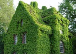 Великолепные зеленые стены