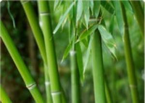 Применение бамбука в ландшафтном дизайне