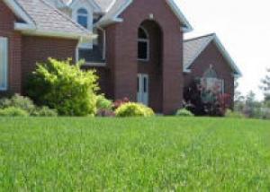 Травянистые газоны в вашем саду