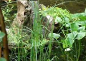 Природа поможет вам создать пейзажный сад