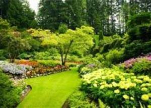 Зелень на участке с красотой и пользой