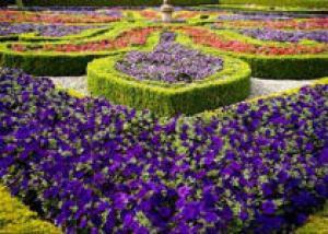 Дизайн цветников
