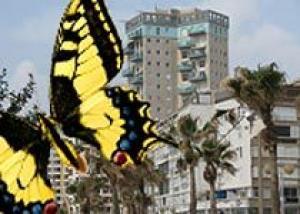 Бат-Ям превращают в город бабочек