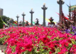 В Анапе установят памятник розе