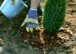 Правила посадки древесно-кустарниковой растительности