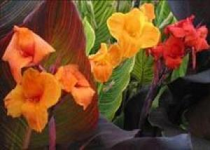 Какого цвета должны быть весенние цветы?