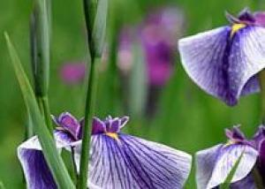 Печерский парк приглашает на выставку из 200 тысяч цветов