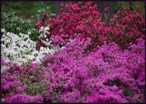 Садоводы тратят деньги только на естественную красоту