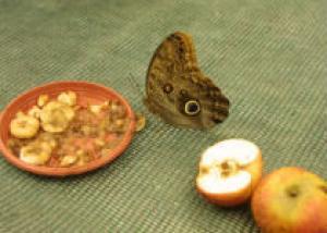 В Одессе состоится выставка бабочек всего мира