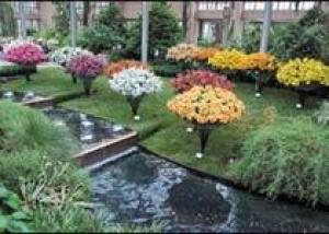 В рае для цветоводов вновь распускаются лилии
