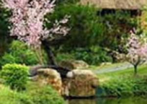Озеленение дачного участка шпалерными культурами