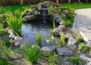Уход за водными сооружениями в саду