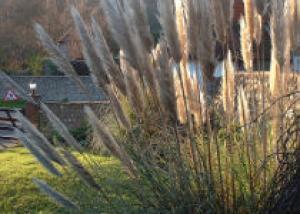 Полупогруженные растения для озеленения пруда