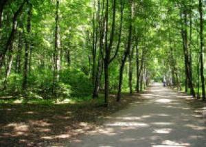 В Москве появился питомник по выращиванию саженцев ценных пород деревьев