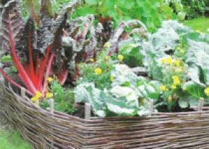Горшечные и контейнерные растения