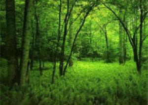 В Белгородской области появится 100 тысяч га леса