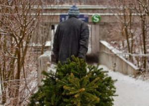 Кемеровские власти проводят программу утилизации новогодних елок