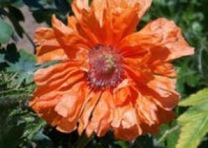 Сад, цветущий в любую погоду