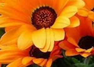 Какие цветы можно сеять весной в грунт