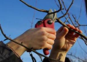 Время обрезать деревья и кустарники!