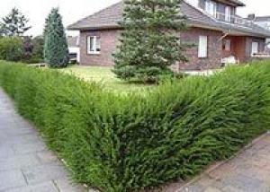 Дизайн ландшафта - искусство создания неповторимого, индивидуального образа вашего дома и сада