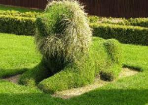 Искусство топиари в вашем саду