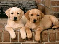 Ученые доказали, что собаки могут ревновать