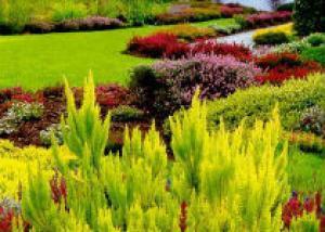 Создаем свой вересковый сад