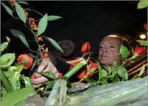 Флористы-любители Хакнелла и повеселились, и ума набрались