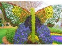 В ботаническом саду Монреаля открылся фестиваль цветов